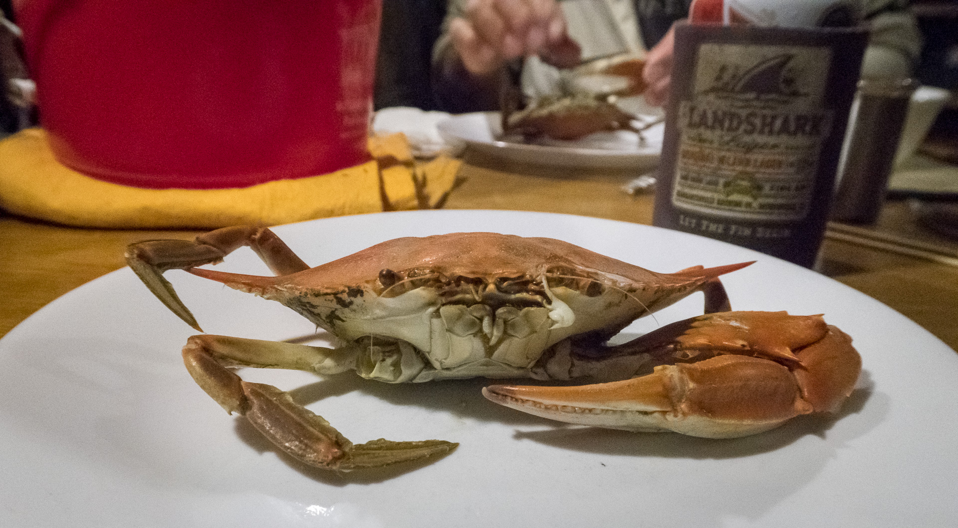 Sailboats, Midshipmen and Blue Crabs, Oh My!